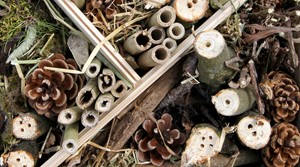 Go wild for nature and create a bug hotel